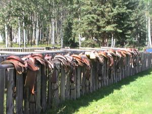 Western Wilderness Adventures In Brazeau Canada Lets Book Hotel