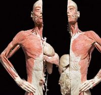 Bodies: The Exhibition in New York City
